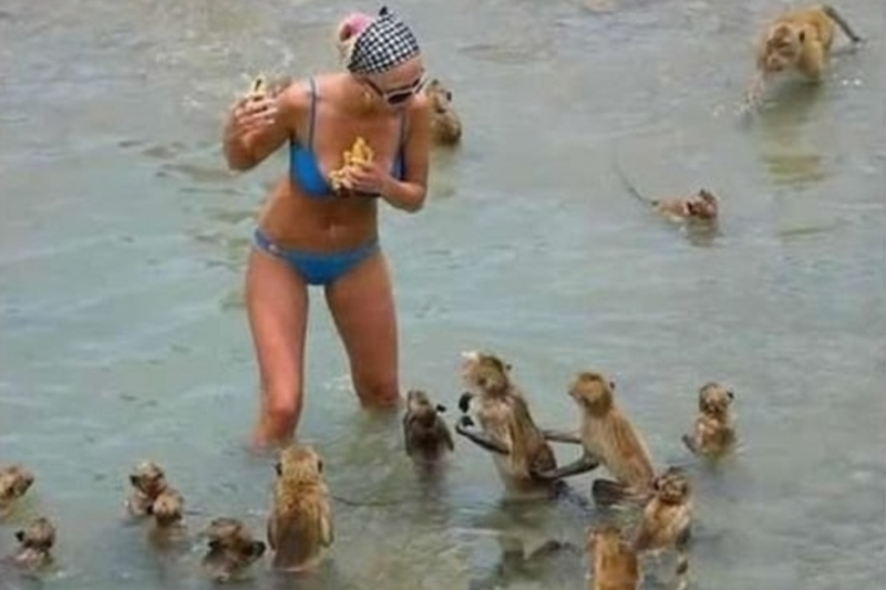 The Monkey Attack