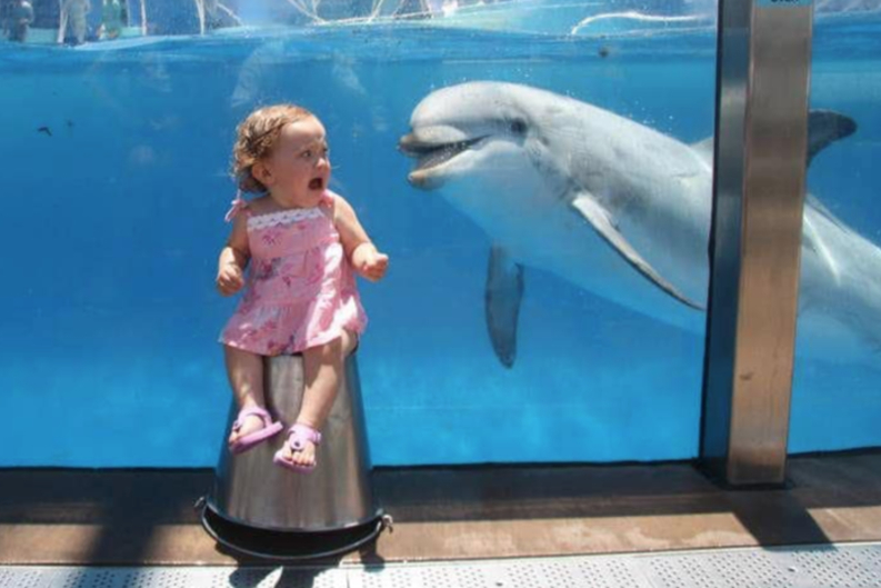Dolphin And The Baby