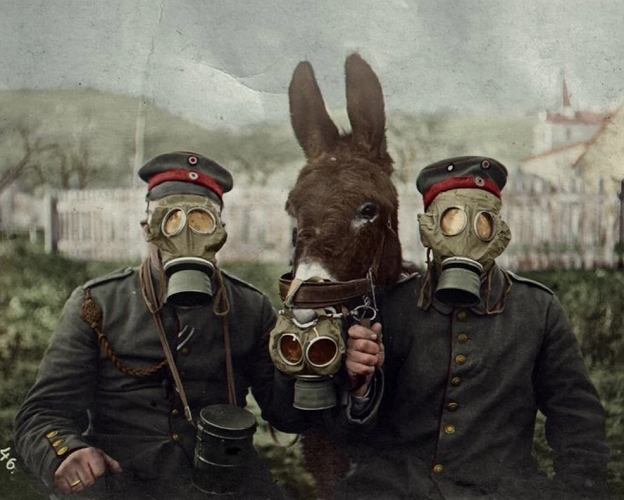A German Soldier Duo And Their Donkey